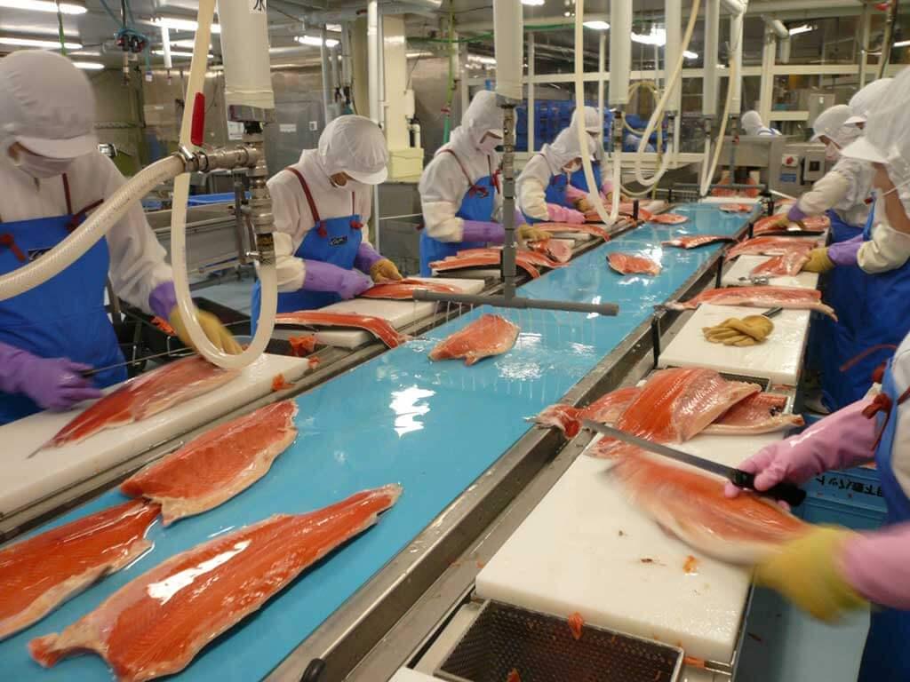Băng tải thực phẩm ngành thủy sản