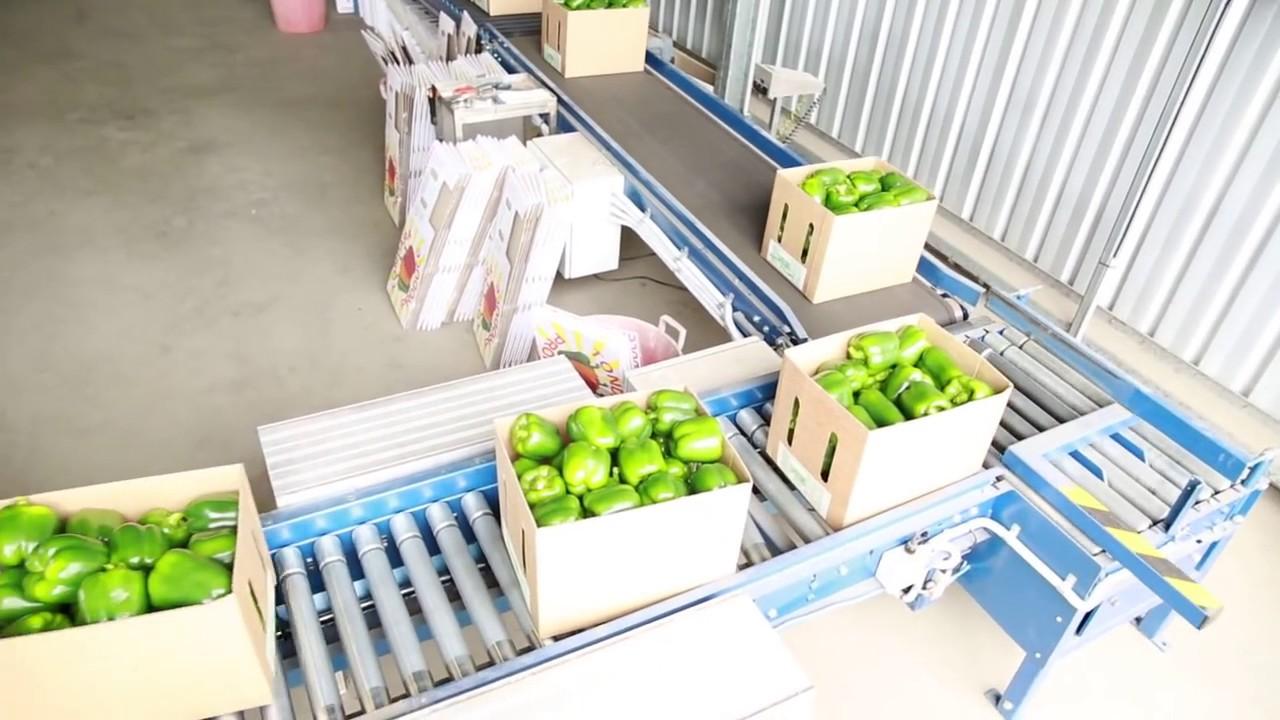 băng tải trong nông nghiệp